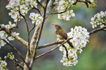 ptak na gałęzi